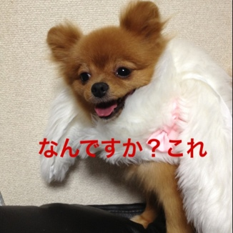 fc2blog_201308081316203e3.jpg