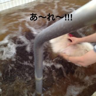 fc2blog_201308152131111dc.jpg