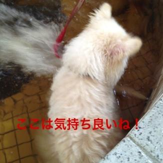 fc2blog_2013081521372723a.jpg