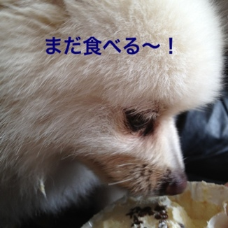 fc2blog_20130817191204665.jpg