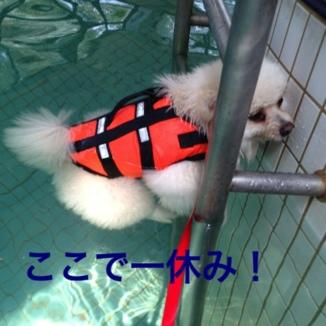 fc2blog_201308191825379e2.jpg