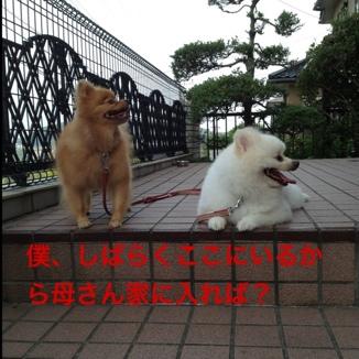 fc2blog_20130825193518cc8.jpg