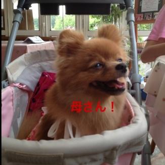 fc2blog_201308262135242d6.jpg