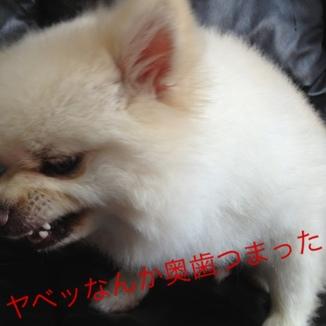 fc2blog_2013082717165531e.jpg