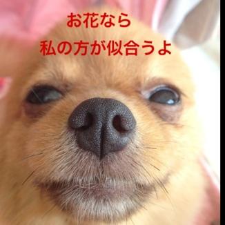 fc2blog_20130830201847ca3.jpg