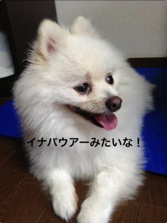 fc2blog_2013090820314674e.jpg