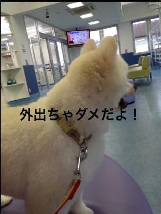 fc2blog_2013091120484349e.jpg