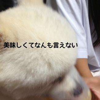 fc2blog_20130920185534fac.jpg