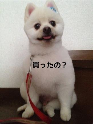 fc2blog_2013092122015133e.jpg