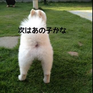 fc2blog_20130923151750c8c.jpg