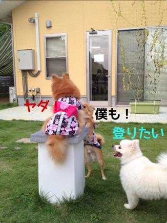 fc2blog_20130925201346a71.jpg