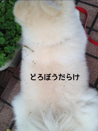 fc2blog_2013100411184996e.jpg