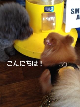 fc2blog_201310142115349da.jpg