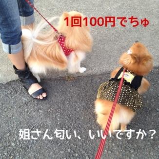 fc2blog_20131019193155f8c.jpg