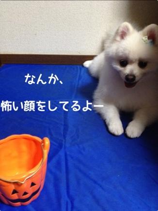 fc2blog_201310252057466c1.jpg