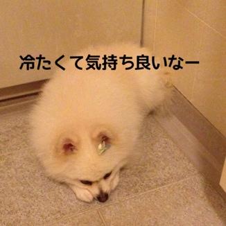 fc2blog_2013102922542561c.jpg