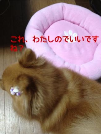 fc2blog_20131031202657a1f.jpg