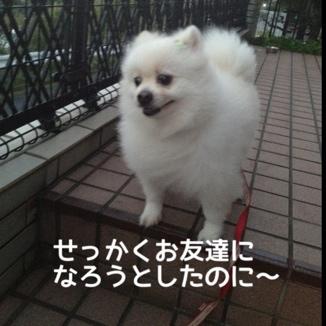 fc2blog_20131113213742e4e.jpg