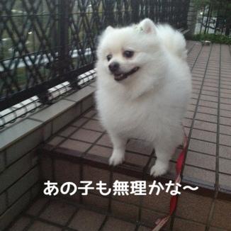 fc2blog_20131113213940a5c.jpg
