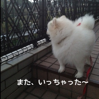 fc2blog_2013111321410593b.jpg
