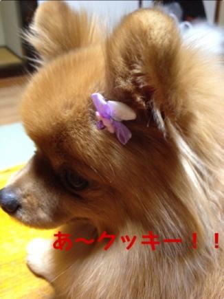 fc2blog_20131118213654c4a.jpg