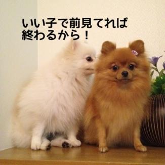 fc2blog_20131119190845c92.jpg
