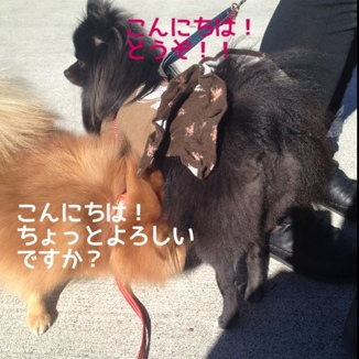fc2blog_201311241738452a0.jpg