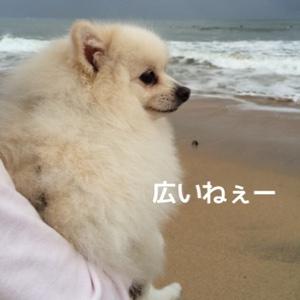fc2blog_20141028200113260.jpg