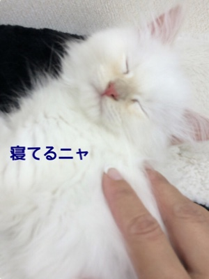 fc2blog_201411041927403a4.jpg