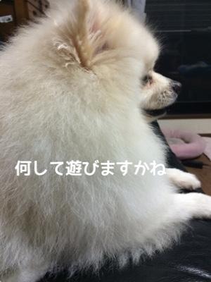 fc2blog_201411131946458ae.jpg