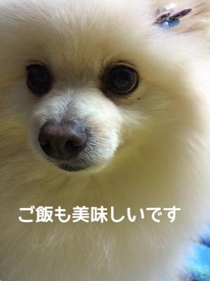 fc2blog_20141119193232f10.jpg