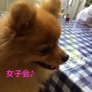 fc2blog_20141125194357ace.jpg