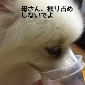 fc2blog_20141203192549e11.jpg
