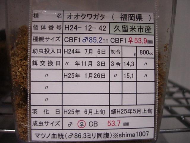 DSCN0210.jpg