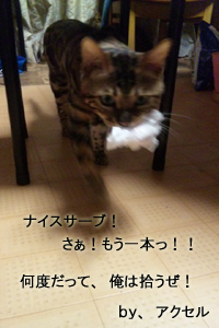 20131119233246943.jpg