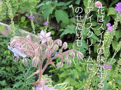 2013080414112952b.jpg