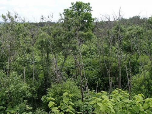 北方ジャングル