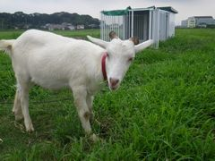 [写真]小屋の前で餌を食べていたアランが振り返ったところ