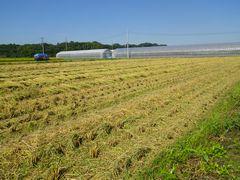 [写真]稲刈りが終わった隣の田んぼの様子