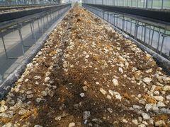 [写真]本圃ハウスの高設ベッドの土に酵素を混ぜ込んだところ