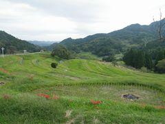 [写真]稲刈りが終わった大山千枚田の田んぼの風景