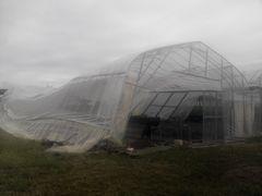 [写真]北西の風に煽られて倒壊してしまった本圃ハウス