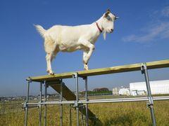 [写真]アランがのぼり台を渡ろうとして片足をあげたところ