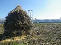 [写真]農園隣の大豆畑に作られたボッチ