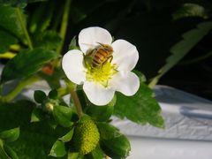 [写真]ミツバチが時計回りに移動したところ