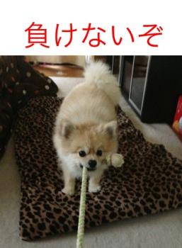 fc2blog_20130408215233ae8.jpg