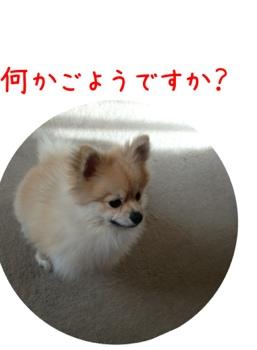 fc2blog_20130410172549ce0.jpg