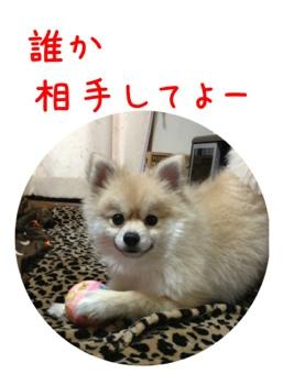 fc2blog_201304111500517a7.jpg