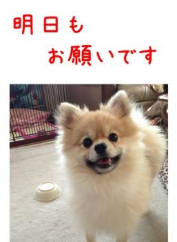 fc2blog_20130412155136c2b.jpg