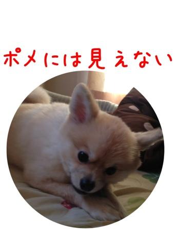 fc2blog_201304160743381b8.jpg